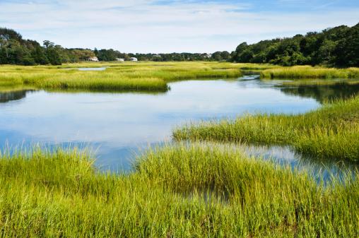 Salt Marsh at Full Tide 168301793