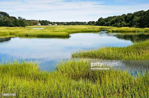 salt marsh at full tide - sumpmark bildbanksfoton och bilder
