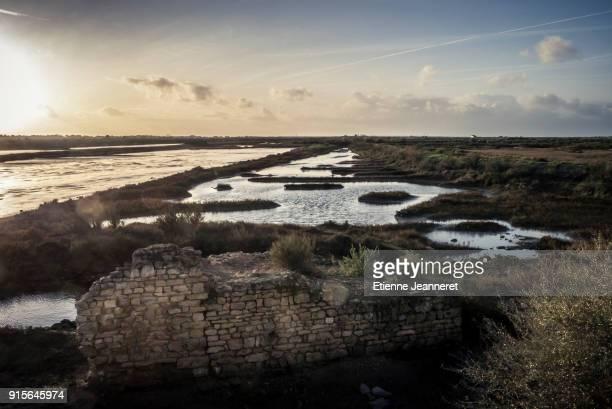 salt marsh, loix, ile de ré, france - marsh stock pictures, royalty-free photos & images
