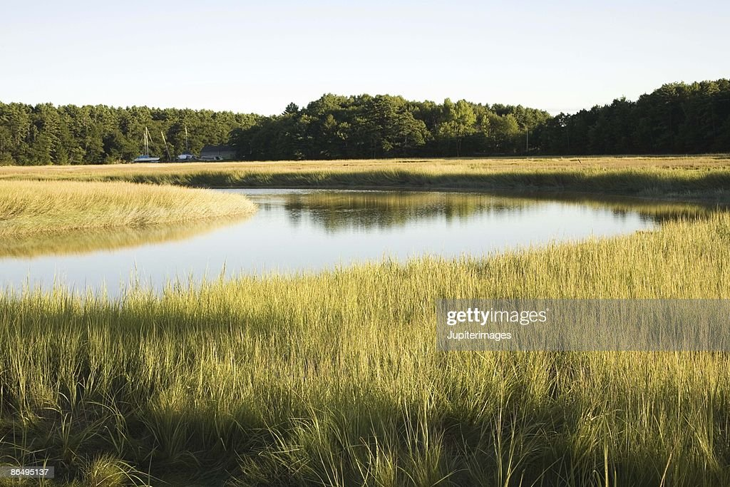 Salt marsh wetlands in Maine, USA : Stock Photo