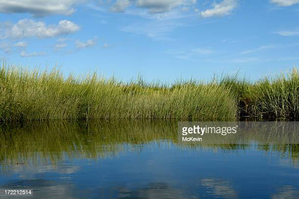 salt marsh with grassy riverbank - estuary stock pictures, royalty-free photos & images