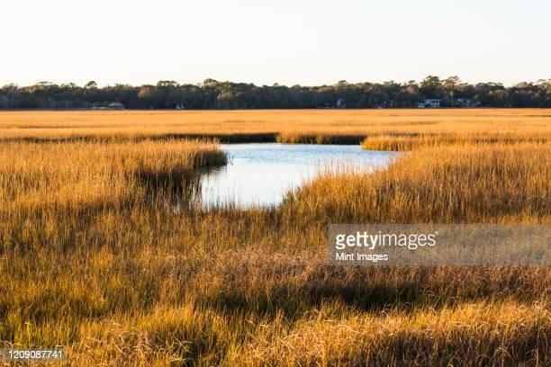 salt marshes landscape on a coastal island - 低湿地 ストックフォトと画像