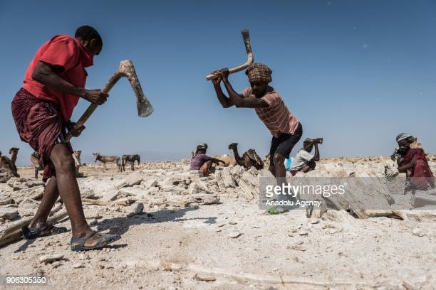 Salt miners mine for salt with their axes at the Danakil Depression, located 100 meters below sea level, near Eritrea border in Afar, Ethiopia on...