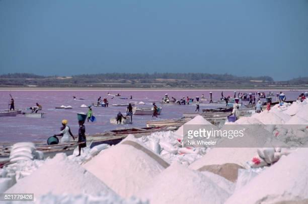salt operation at lac rose - lac rose photos et images de collection