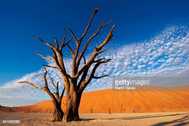Salt pan. Dead Vlei.Namibia