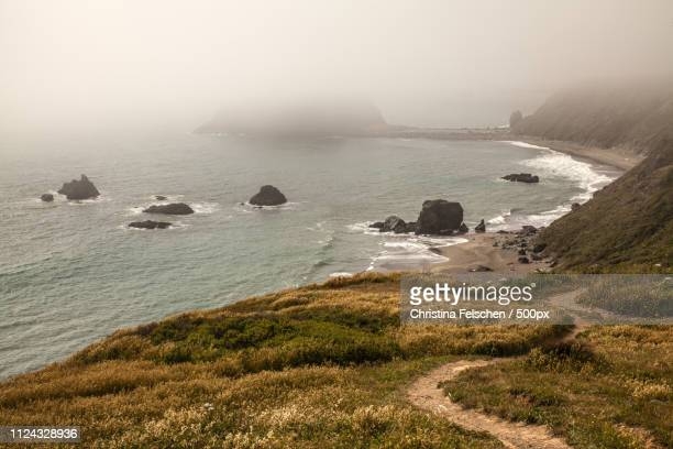 salt point state park - christina felschen stock pictures, royalty-free photos & images