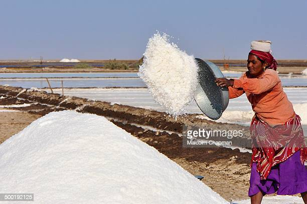 Salt Production in the Little Rann of Kutch, Gujarat, India. Unidentified Indian woman salt worker, gathers salt ready for collection, near...