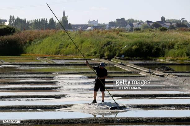 A salt worker harvests salt in Guerande western France on June 16 2017 / AFP PHOTO / LUDOVIC MARIN