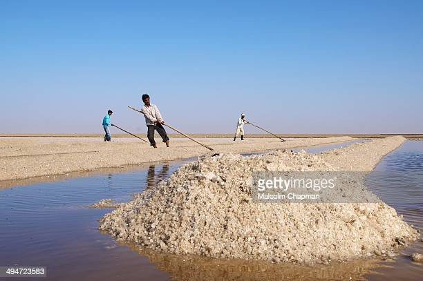 CONTENT] Salt workers on the Little Rann of Kutch salt pans near Dhrangaghra India is world's 3rd largest producer of salt 80% from Gujarat