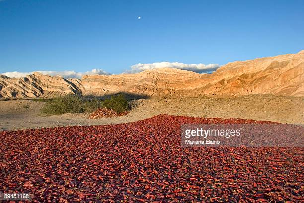 Salta Province. Argentina Dry of peppers.