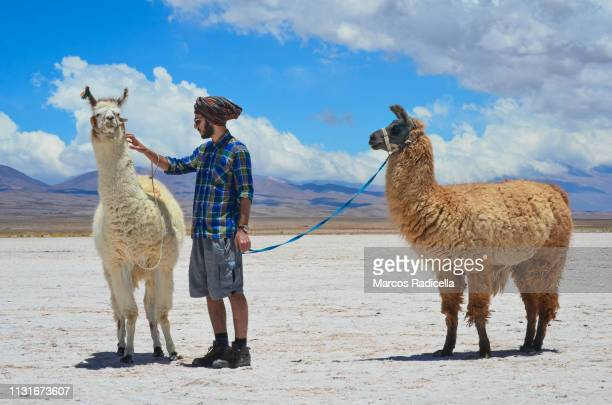 salta province, puna desert, argentina - radicella stock pictures, royalty-free photos & images