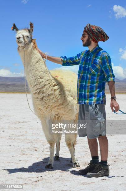 salta province, puna desert, argentina - radicella imagens e fotografias de stock