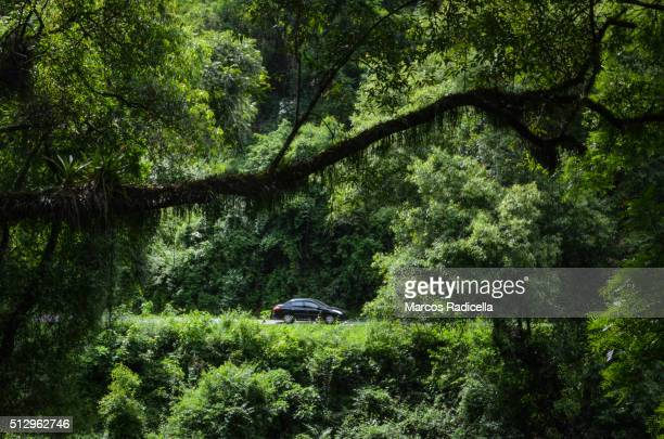 salta - route in the forest (northwest argentina) - hybrid car stock photos and pictures