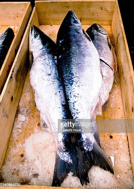 salted salmon - salted stock photos and pictures