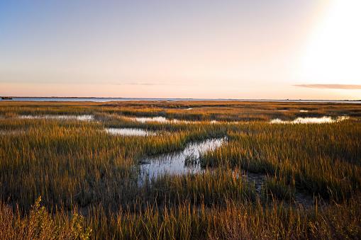 Saltmarsh on the Virginia coast in USA in the golden sun at sunset. 1191278352