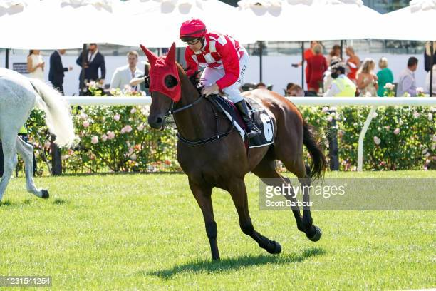 Saltpeter ridden by William Pike heads to the barrier before the 2021 Lexus Melbourne Cup Tour at Flemington Racecourse on March 06, 2021 in...