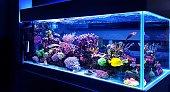 Saltwater coral reef aquarium fish tank