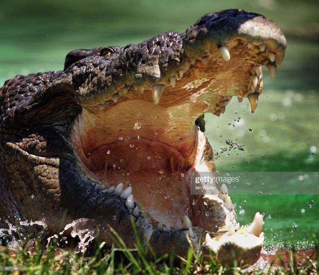 Australia's Deadliest Animals : News Photo