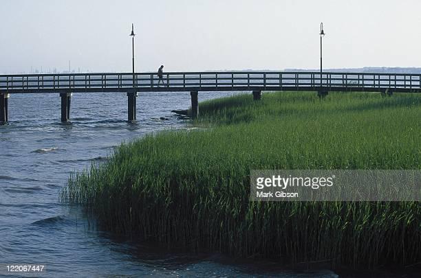 Saltwater tidal marsh grass, New Castle, DE