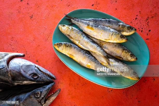 salty sardines in turquoise plate on coral color - salted stock pictures, royalty-free photos & images