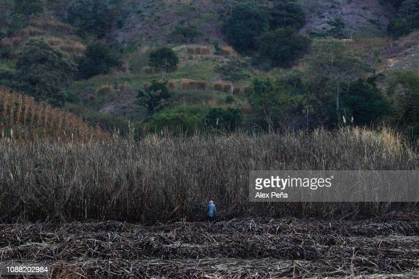 Salvadoran man works with his machete during the sugar cane harvest on December 29 2018 in Chalchuapa El Salvador El Salvador is the second largest...