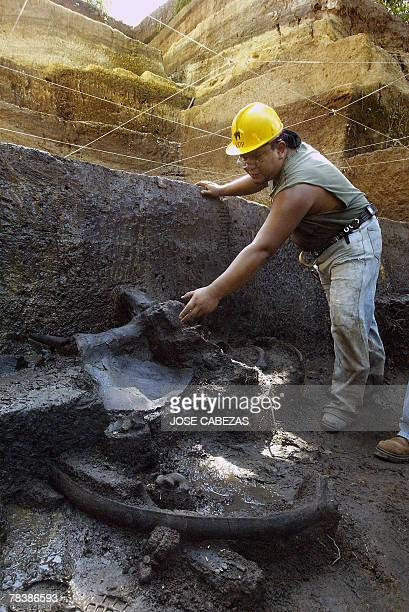 Salvadorean paleontologist Daniel Aguilar shows the fossile remains of a giant sloth nearby the Tomayate river in Apopa 13 kms from San Salvador on...