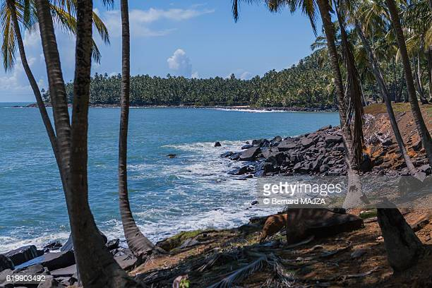 salvation islands - landscape - guayana francesa fotografías e imágenes de stock