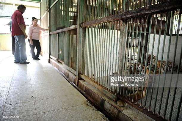 Sam Alagappasamy Chelleiyah and Dr. Liang Kaspe inspect the place where a lion died 5 months ago at Surabaya Zoo on May 13, 2014 in Surabaya,...