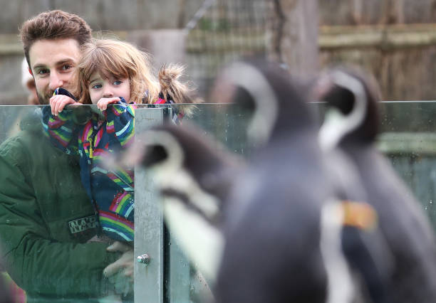 GBR: ZSL London Zoo Reopening As Festive Wonderland