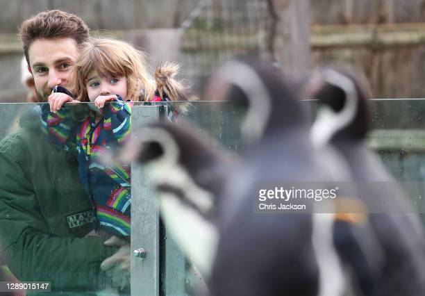 Sam and 2 year old Honor Duggan watch the penguins on penguin beach as London Zoo reopens as festive wonderland at ZSL London Zoo following UK...