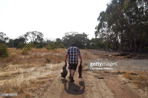 Sam Mitchell owner of the Kangaroo Island Wildlife Park in the Parndana region carries a dead koala and kangaroo to a mass grave site on January 08...