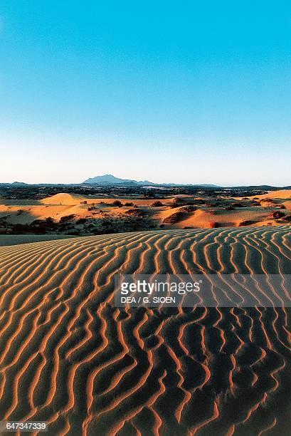 Samalayuca desert dunes south of Ciudad Juarez State of Chihuahua Mexico