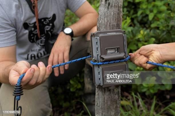 Samantha Rincon and Matt Hyde, members of the Panthera organization for the preservation of big cats, place a trap's camera at La Aurora natural...