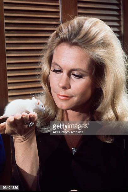 BEWITCHED 'Samantha's Secret Spell' Season Six 11/13/69 Samantha tried to undo a spell that turned Darrin into a mouse