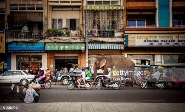 sambo the elephant walks down busy urban street - phnom penh stock pictures, royalty-free photos & images