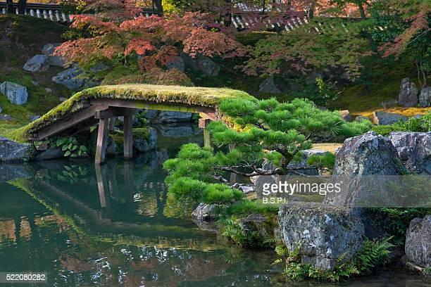 sambo-in teien garden at daigo-ji temple in kyoto, japan - shingon buddhismus stock-fotos und bilder
