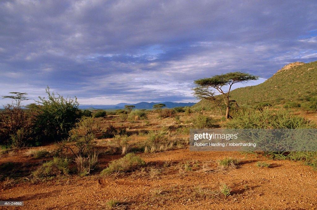 Samburu National Reserve, Kenya, East Africa, Africa : Foto de stock