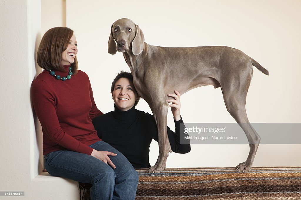 A Same Sex Couple Two Women Posing With Their Weimaraner Pedigree Dog Stock Photo -2119