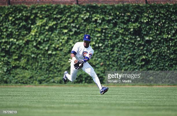 Sammy Sosa of the Chicago Cubs making a catch in the outfield during a MLB game against the San Diego Padres on June 3, 1992 in Wrigley Field in...