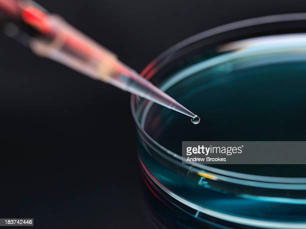 sample being pipetted into petri dish for analysis in laboratory - petri dish stock pictures, royalty-free photos & images