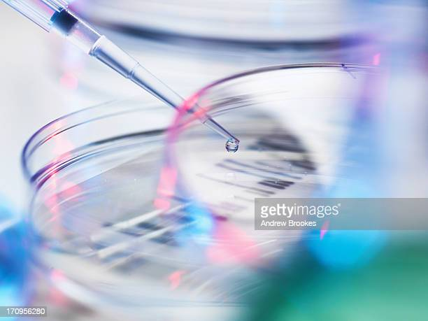 DNA sample being pipetted into Petri dish