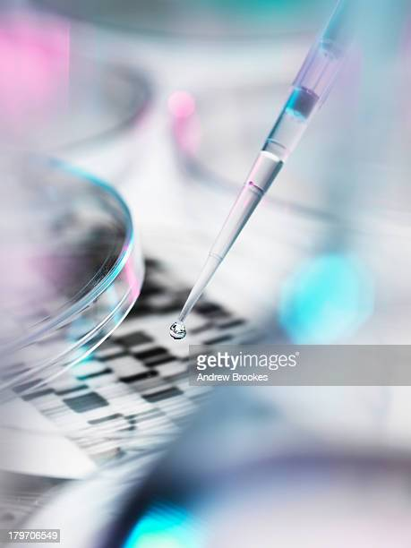 DNA sample being pipetted into petri dish with DNA gel in background
