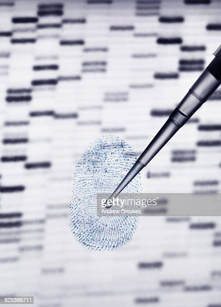 DNA sample being pipetted onto human fingerprint and DNA gel illustrating genetic engineering