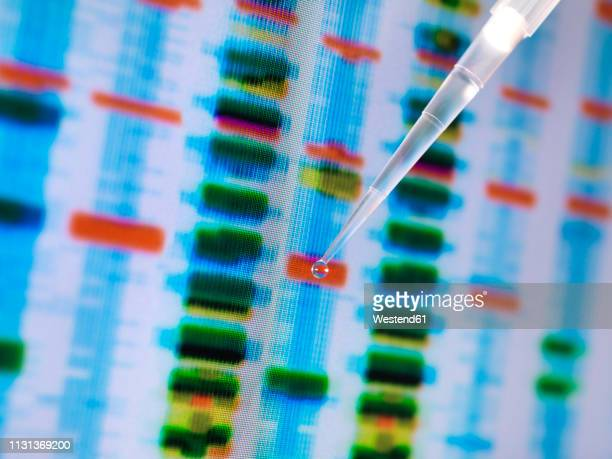 dna sample in a pipette with the results on a computer sceeen in a laboratory - genetic modification stock pictures, royalty-free photos & images