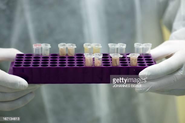 Samples of a noodle product with meat are seen in a laboratory to be DNAtested on February 19 2013 in Berlin German authorities announced that 24...