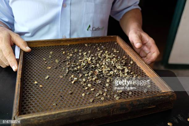 ANSERMANUEVO COLOMBIA JANUARY 21 2016 Samples of harvested coffee beans are checked for quality through a sifter in a warehouse on January 21 2016 in...