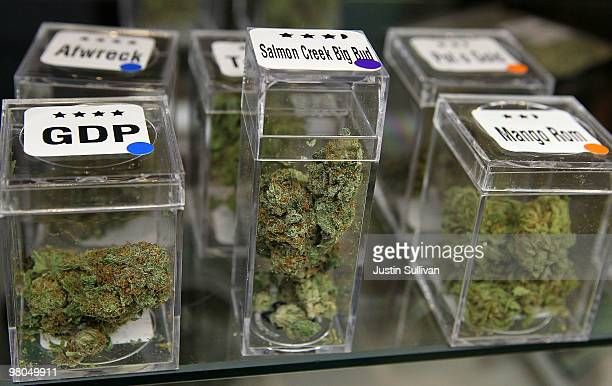 Samples of medicinal marijuana are displayed at the Berkeley Patients Group March 25 2010 in Berkeley California California Secretary of State Debra...