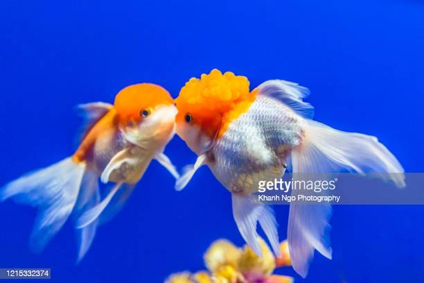 samples of sea life in an aquarium - khanh ngo stock pictures, royalty-free photos & images