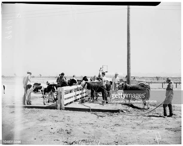 San Bernardino County Fair 26 August 1953 Betty Marie Beach Bob Jones Johnny HenryDarlene FisherGeorge HoogweenPeggy PetaucciPhyllis FisherDonna...