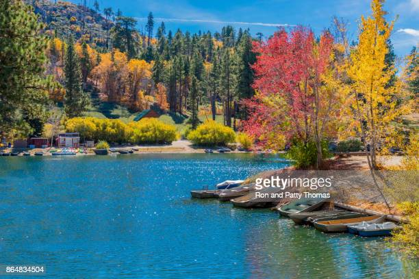 san bernardino county with autumn backit oak tree forest at green valley lake , ca (p) - big bear lake stock pictures, royalty-free photos & images